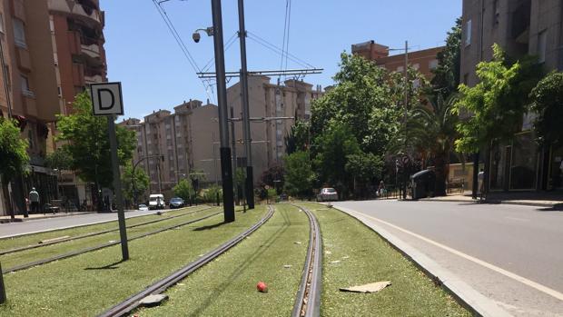 Basura esparcida en un céntrico tramo del tranvía de Jaén