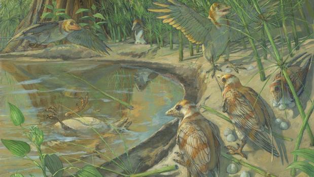 La hembra muerta en el agua (con un huevo no visible dentro de su abdomen), representa al individuo fosilizado descrito en el estudio