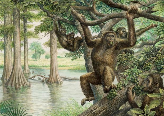 Los investigadores creen que Rudapithecus era bastante parecido a un mono, pero cuando caía se quedaba de pie como un humano
