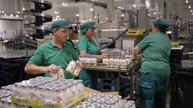 Trabajadores de Ybarra en la nave de las mayonesas