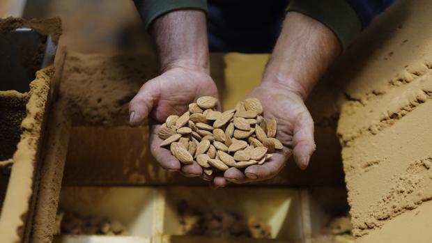 Almería lidera la exportación de almendras con casi dos tercios
