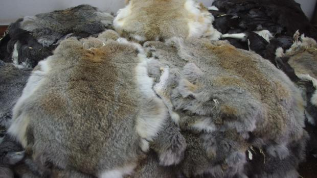 Las pieles de las que se apropió estaban valoradas en un cuarto de millón de euros