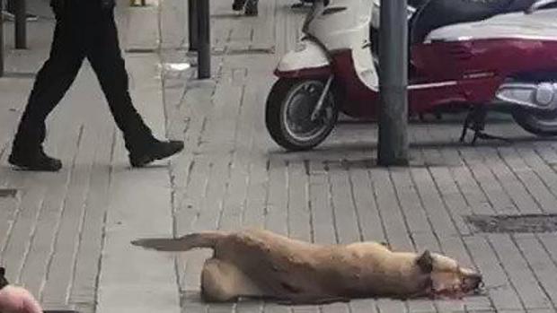 El perro abatido por el guardia urbano