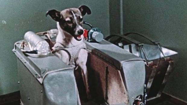 Laika, durante los entrenamientos previos a su funesto viaje espacial