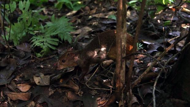 Repueblan el mayor bosque urbano del mundo con especies animales extintas