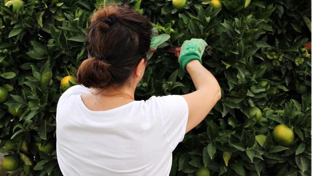 Las mujeres rurales de El Puerto, una visibilidad necesaria para la perpetuidad del oficio