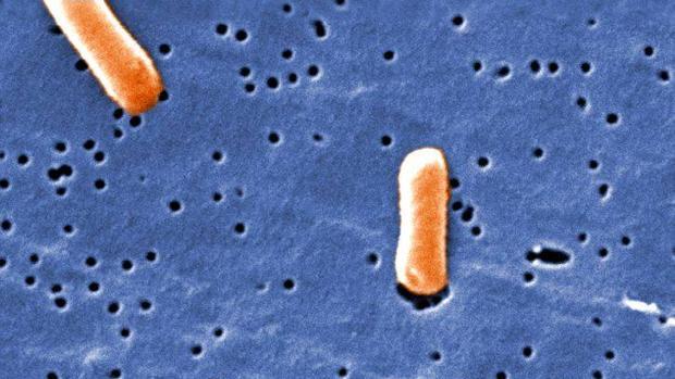 La bacteria salmonella