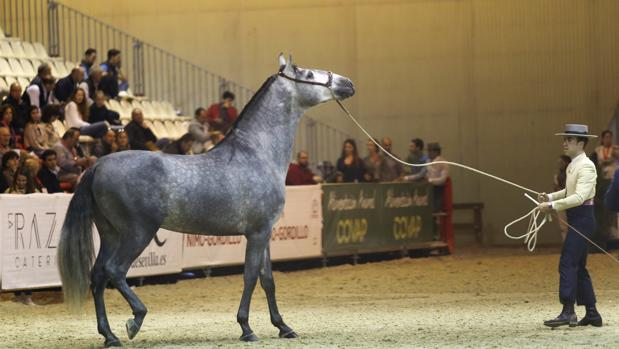 Una de las pruebas del campeonato de Ancce