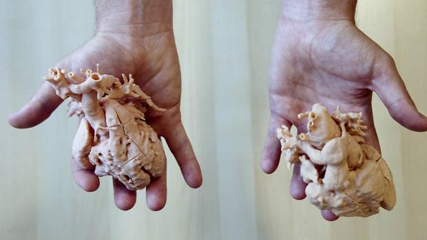Dos corazones impresos a tamaño real por una impresora 3D