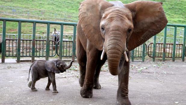 Elefantes en el Parque de la Naturaleza de Cabárceno
