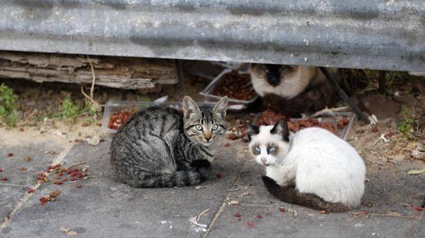 Dos gatos jóvenes en una foto de archivo